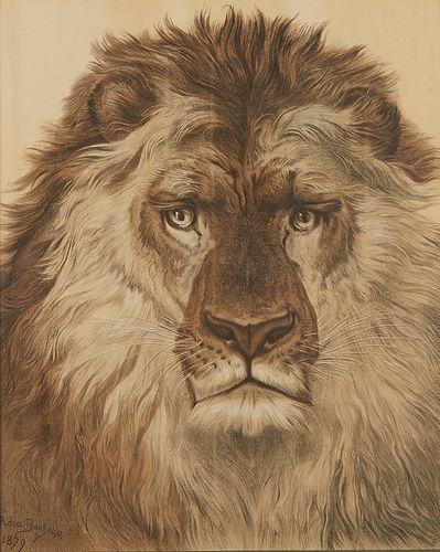 Rosa Bonheur Lion Print 1879