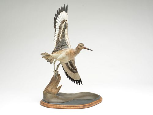 Impressive willet in flight, William Gibian, Onancock, Virginia.