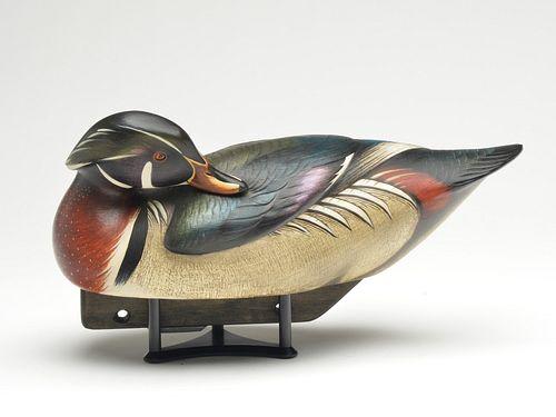 Important back preening wood duck drake, Jim Schmiedlin, Bradfordwoods, Pennsylvania.