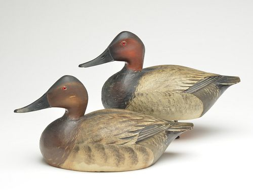 Well carved pair of canvasbacks, Elmer Crowell, East Harwich, Massachusetts.