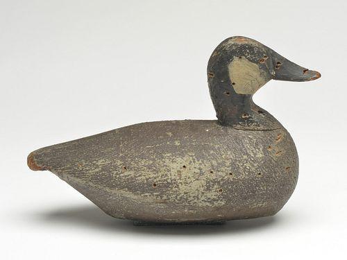 Important ruddy duck, Ned Burgess, Churches island, North Carolina, circa 1920s.