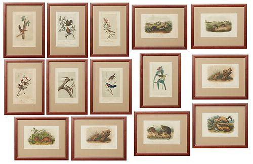 "John James Audubon (1785-1851, Haitian/American), Thirteen Octavo Prints, 19th c. consisting of ""Small-headed Flycatcher,"" No. 14, Plate 67; ""Blackcap"
