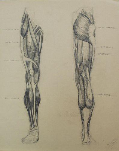Bo Bartlett - Untitled Anatomy Study I