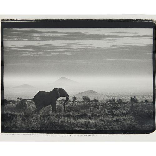 Peter Beard, photograph, stamped