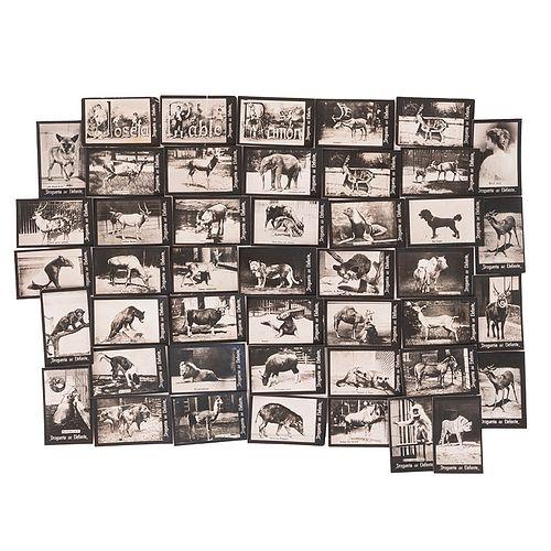 Drogueria del Elefante. Animales / Letras / Retrato. Mexiko: A. Vargas Sucs, principios de siglo XX. Fotografías, 3.5x5.5cm. Piezas: 44