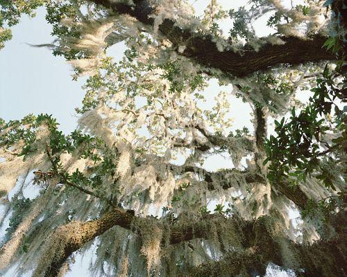 Cassandra Klos, BFA '14 - Under the Spanish Moss, Slidell, Louisiana