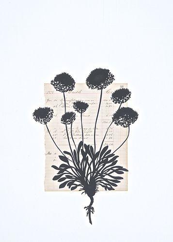 Deborah Weiss - Midnight Blooms No.7