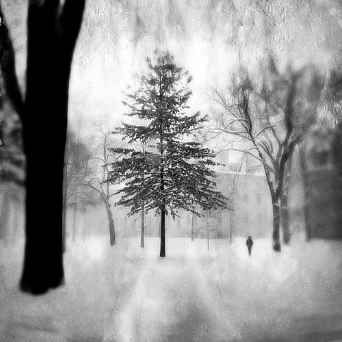 Jerry Russo, BFA, Diploma, 5th year '01, Snow Storm Harvard Yard