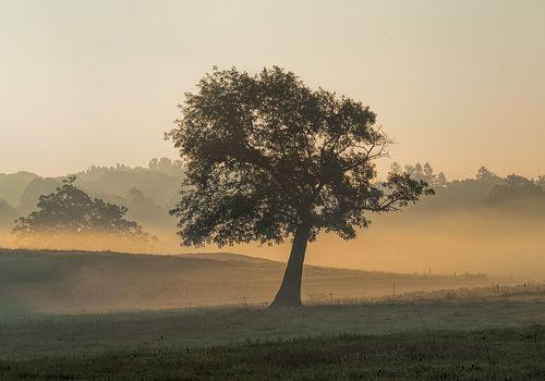 Stoney Stone , Appleton Tree