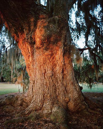 Cassandra Klos, BFA '14 - The Great Divine, Slidell, Louisiana *