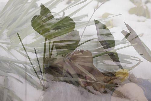 Lin.Fe, Diploma '13, Untitled (test 7, 'nest nest)