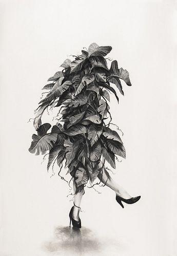 Gonzalo Fuenmayor, MFA '04 - Botanical Improvisations #9