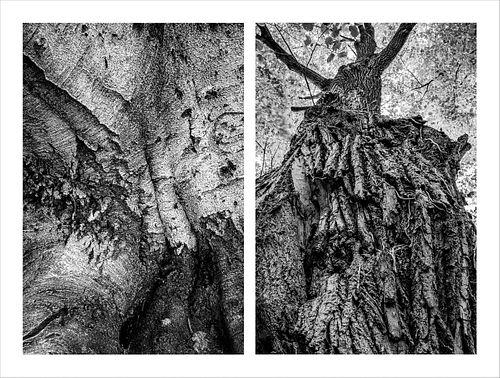 Nallieli Santamaria, MFA '23, Trees That Hold Me, 1