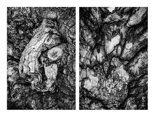 Nallieli Santamaria, MFA '23, Trees That Hold Me, 2