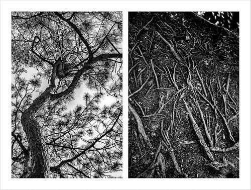 Nallieli Santamaria, MFA '23, Trees That Hold Me, 3