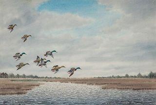 Joseph D. Knap (1875-1962) Mallards in Flight Over Marsh