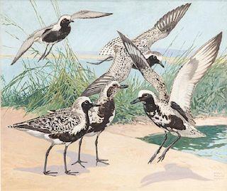 Lynn Bogue Hunt (1878-1960) Flight of Black-Bellied Plover