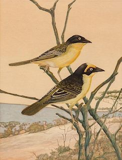 Francis Lee Jaques (1887-1969) Two Orioles