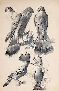 Hawk and Hoopoe