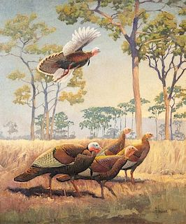 Francis Lee Jaques (1887-1969) Wild Turkey
