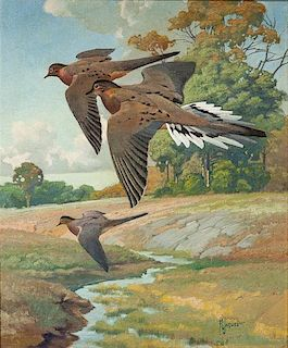 Francis Lee Jaques (1887-1969) Mourning Doves