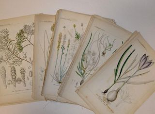 Collection of floral and botanical bookplates, 19th century, and a selection of hand coloured aquati