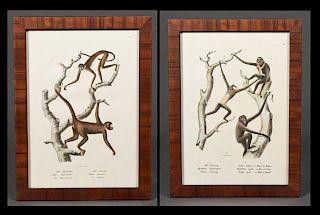 Pair of German Chromolithographs of Monkeys, c. 19