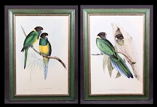 """J. Gould and H.C. Richter, """"Platycercus Banneri,"""""""