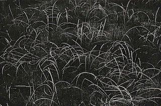 Harry Callahan (American, 1912-1999)      Grasses, Wisconsin
