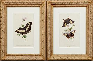 "English School, ""Butterflies,"" early 20th c., pair"