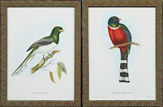 """J. & E. Gould, """"Trogan Gigas,"""" and """"Trogan Mexican"""