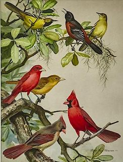 Roger Tory Peterson (1908-1996) Birds in Magnolia