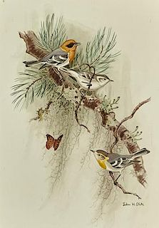 John Henry Dick (1919-2005) Olive Warblers with Butterfly