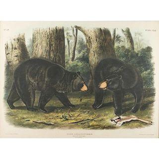 """J.W. Audubon, """"Ursus Americanus Pallas"""""""