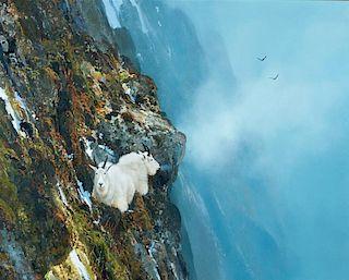 Michael Coleman | Rocky Mountain Goats