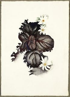 No. 36 - Special (Nicotine Flower) by Georgia O'Keeffe