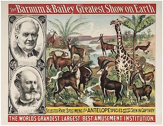 Barnum & Bailey Greatest Show on Earth. Selected Rare Specimens of the Antelope.