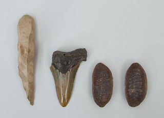 TWO FOSSILS, A PETRIFIED TOOTH, AND A STONE ARROWHEAD