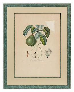 A Set of Six Botanical Prints 19 x 12 1/2 inches.