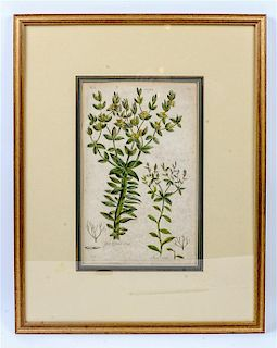 Two Botanical Engravings Sight: 14 3/4 x 9 1/4 inches.