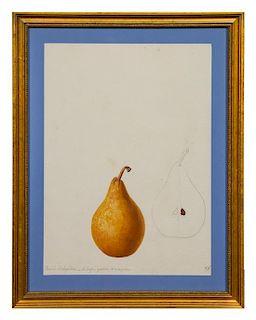 * Anthelme-Eugène Grobon, (French, 1820-1878), Two Studies of a Beurré d'Angleterre Pear, 1843