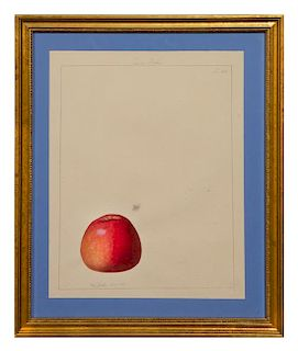 * Anthelme-Eugène Grobon, (French, 1820-1878), Pomme Boche, 1845