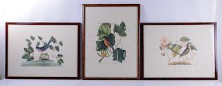 Ornithological Prints