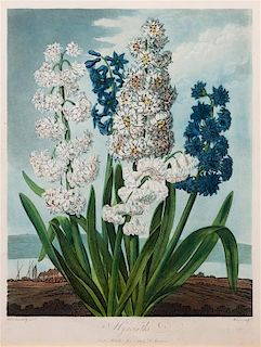* A Group of Three Handcolored Botanical Engravings Largest: 19 3/4 x 15 1/4 inches.