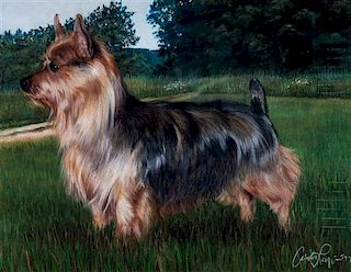 * A Pastel Drawing of an Australian Terrier 17 1/2 x 23 inches.