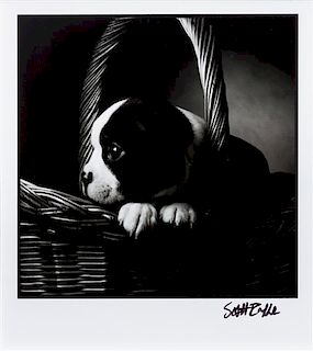 * Four Works of Art depicting Boston Terriers Largest: 11 x 15 inches.