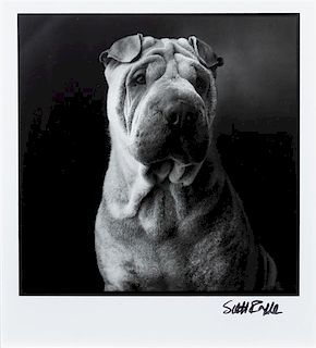 * A Photograph of a Chinese Shar Pei 4 3/4 x 4 1/4 inches.