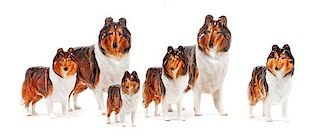 * A Group of Six Royal Doulton Porcelain Collies Width of widest 10 inches.