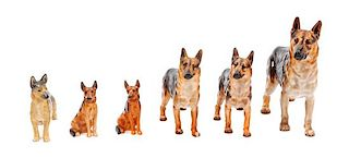 * A Group of Six Porcelain German Shepherds Width of widest 8 inches.