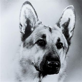 * Five Works of Art depicting German Shepherds Largest: 22 x 27 3/4 inches.